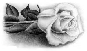 Как научится рисовать розу