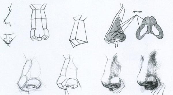Как научиться рисовать нос?