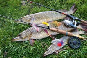 Ловля щуки на спиннинг: приманки и методы ловли